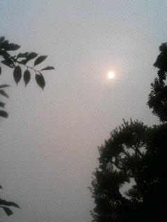 今日も太陽は控え目です。